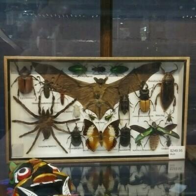Multiple Insect And Bat Specimen Frame