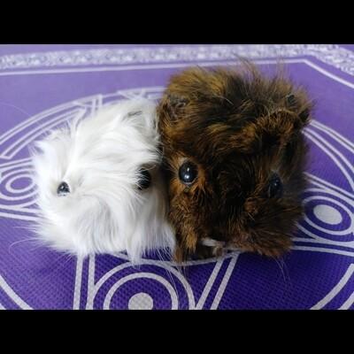 Guinea Pig Heads