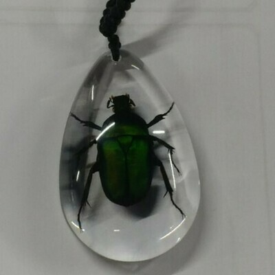 Cockchaifer Beetle Necklace