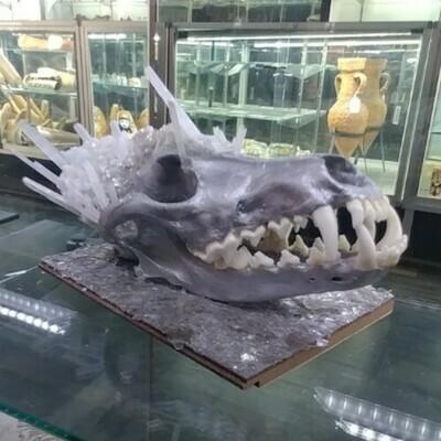 Crystal & Coyote Artistic Skull