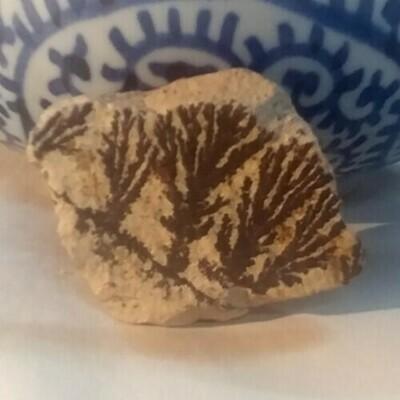 Dendrite Fossil
