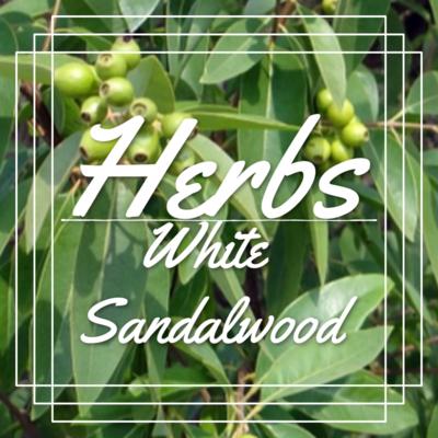 Powdered White Sandalwood (Indian)