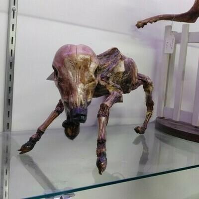 Charging Mummified Bull - Calf