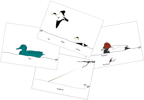 Birds GC2