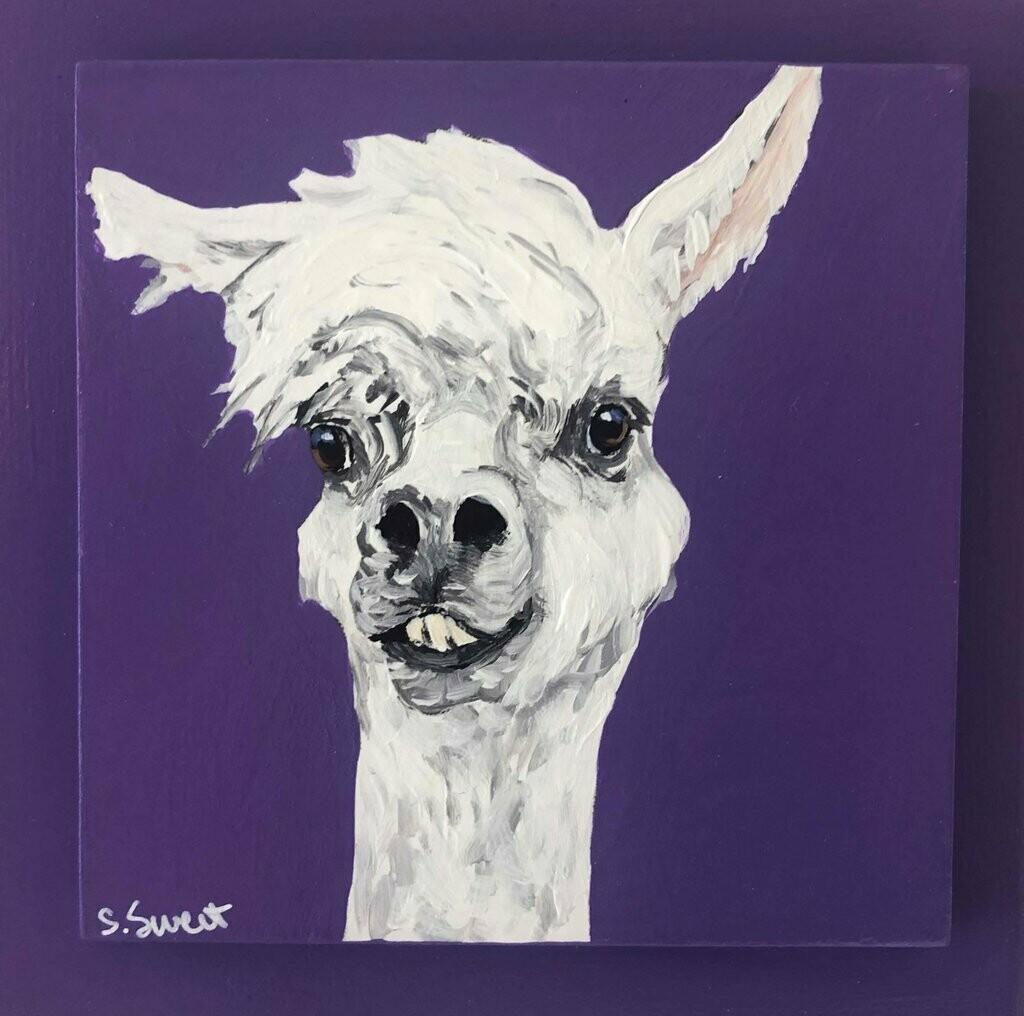 Alpaca on purple