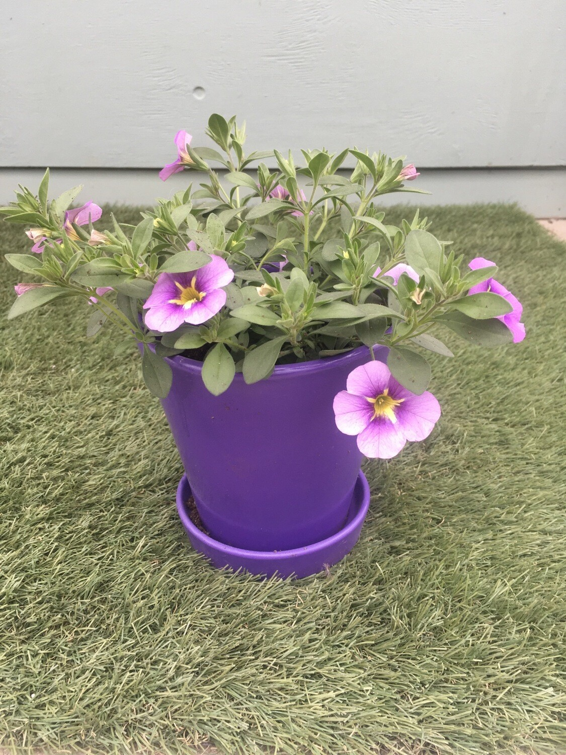 Purple Planter