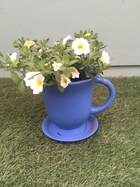Blue Cup & Saucer