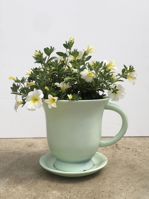 Light Green - Cup & Saucer Planter