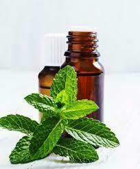 Peppermint Oil (Certified Organic) 10ml
