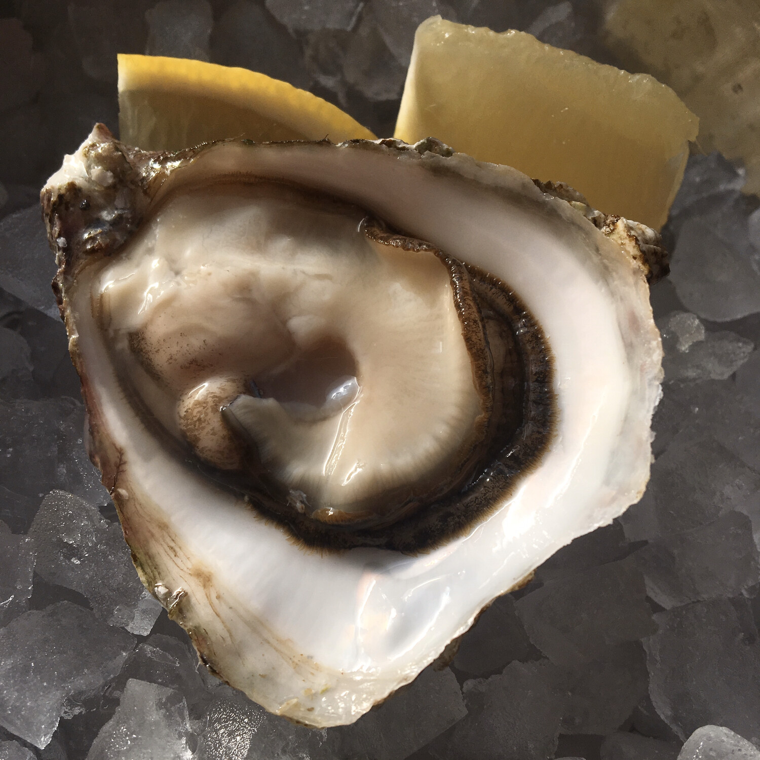 No. 5 Size - Choice Oysters (Shooter)