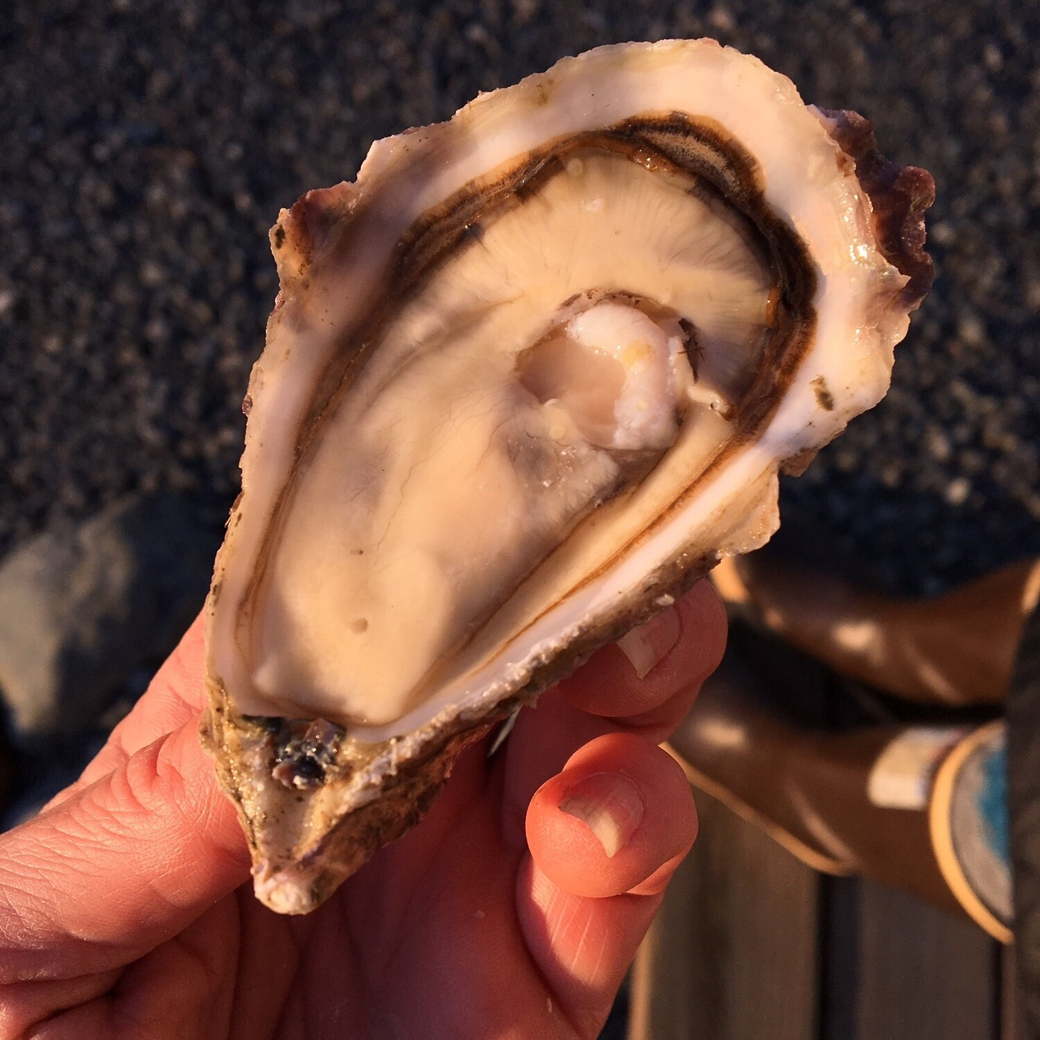 No. 4 Size - Choice Oysters (Petite)