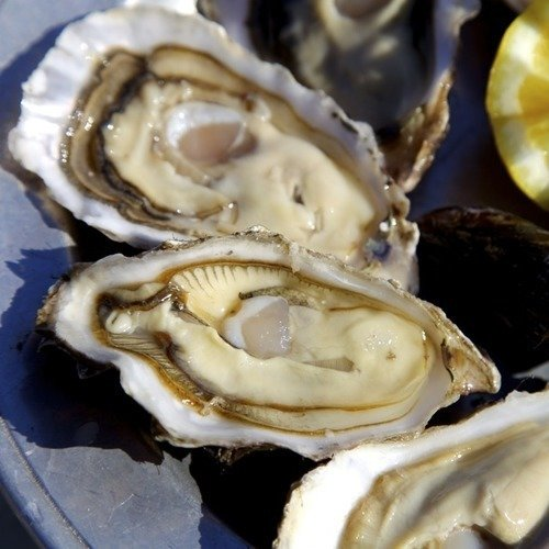 No. 3 Size - Choice Oysters (Medium)