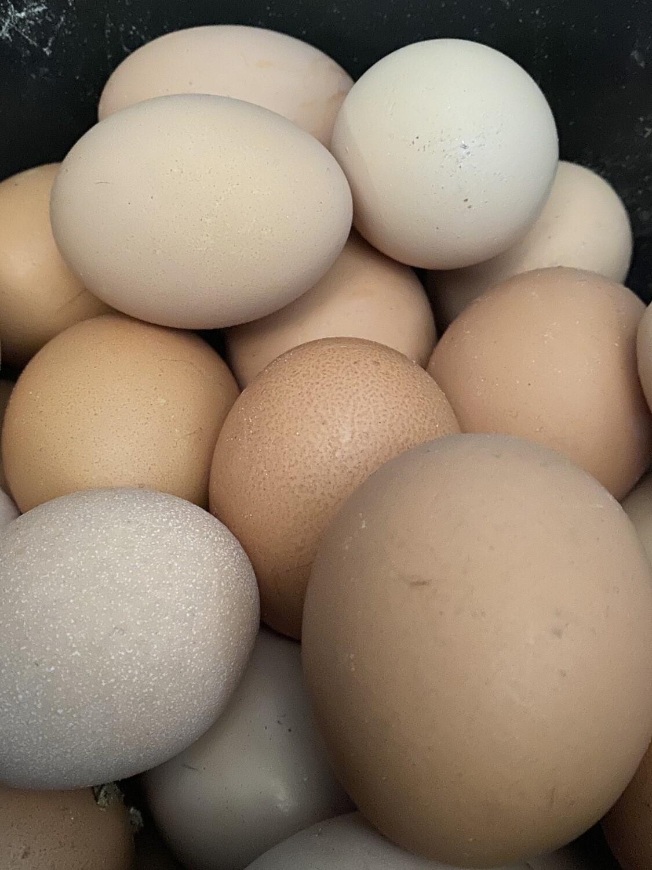 Eggs | Tangerini's Own