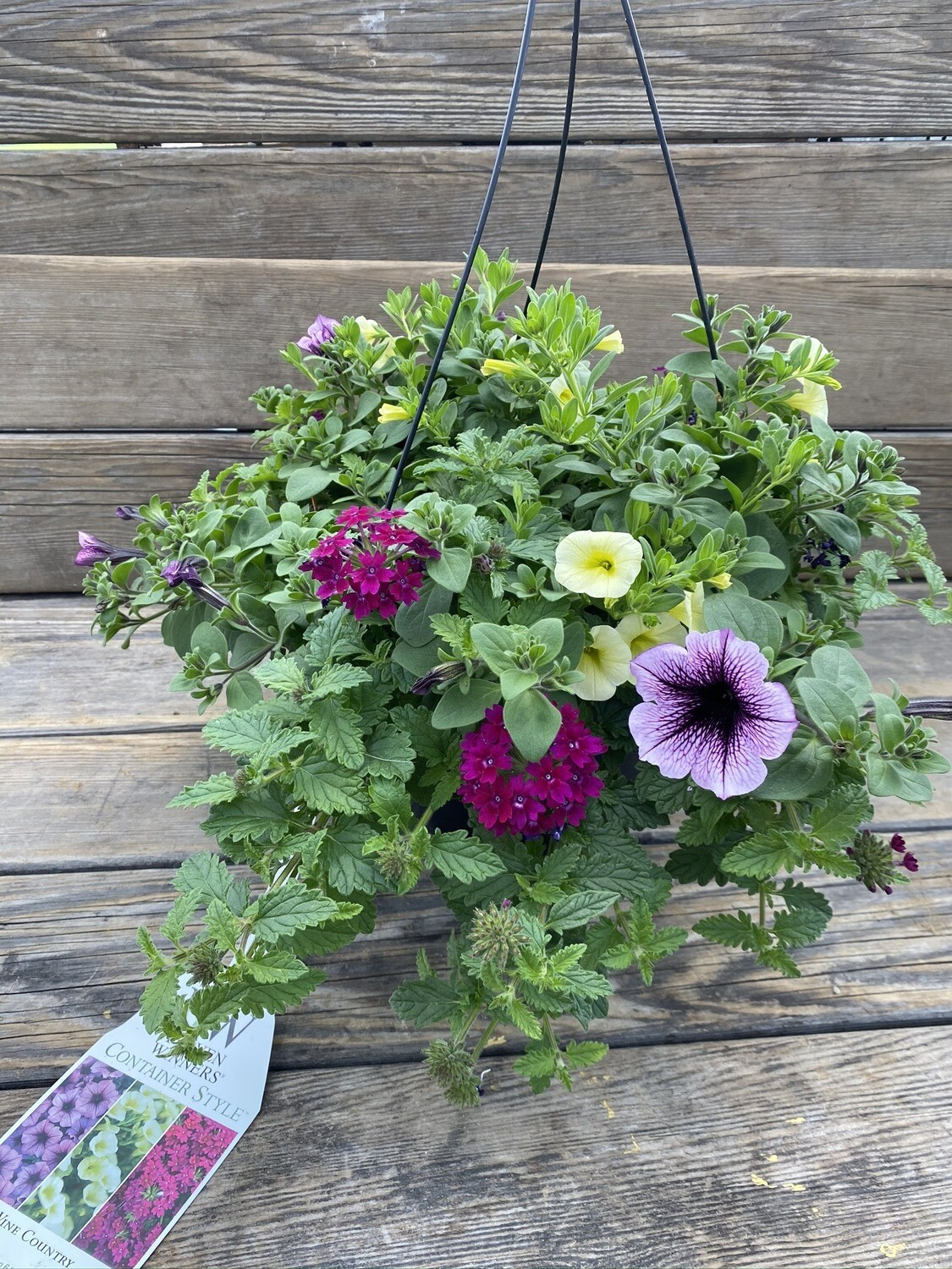Hanging Basket | Wine Country | 10