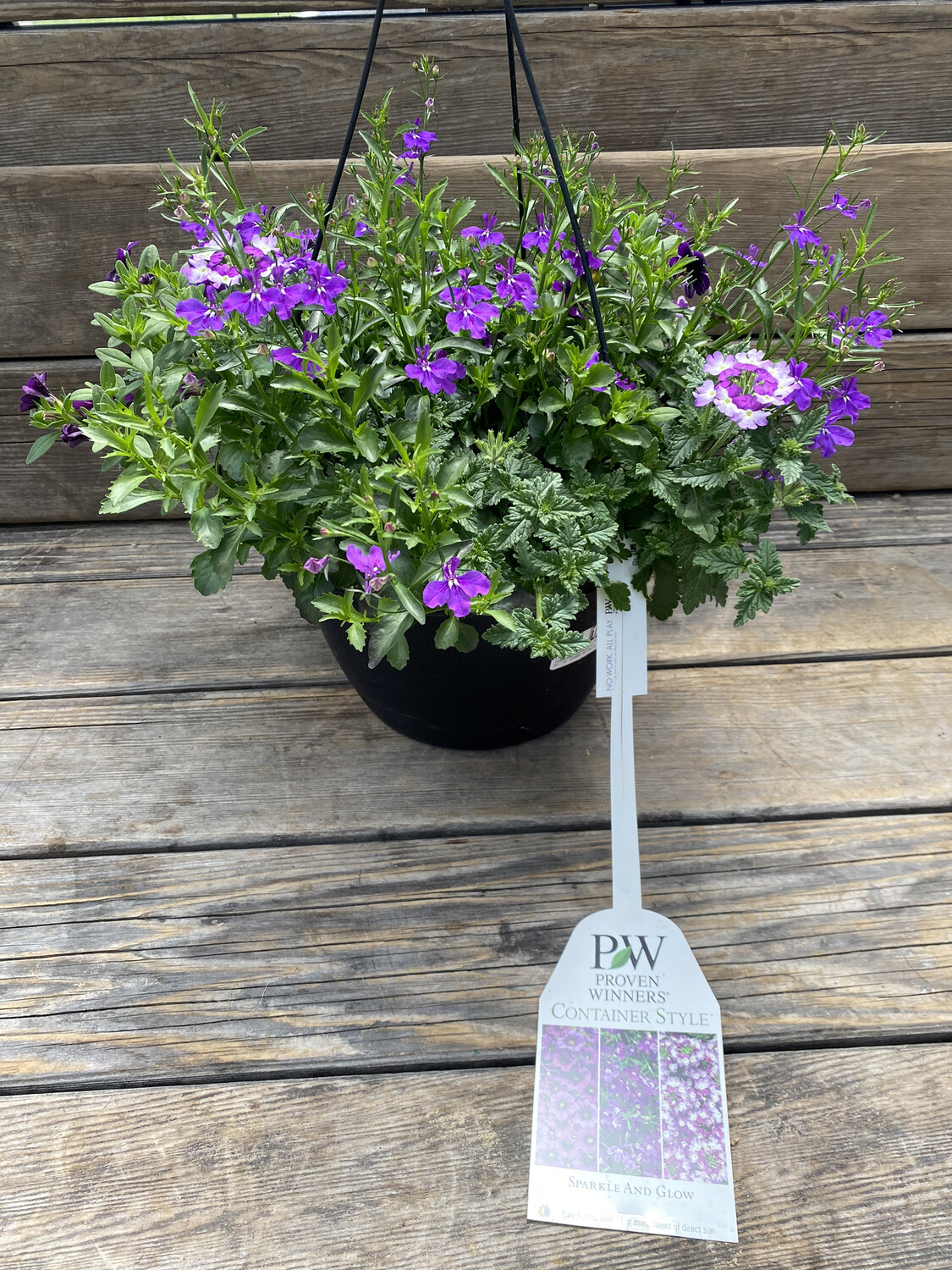 Hanging Basket | Sparkle and Glow | 10