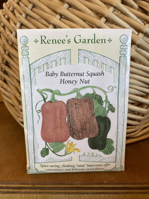 Baby Butternut Squash Honey Nut   Renee's Garden Seed Pack   Past Year's Seeds   Reduced Price
