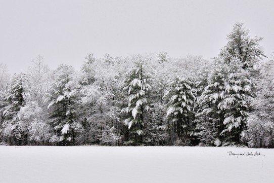 Snowy Evergreens  18x27