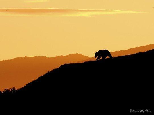 Bear Silhouette  18x24