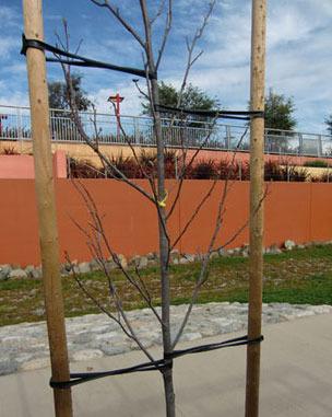 10 Tree Ties 36