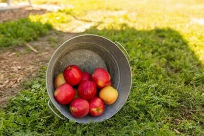 Apples- Pink Lady 3lb bag
