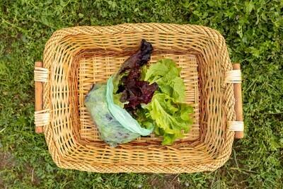 Lettuce- Salad Mix