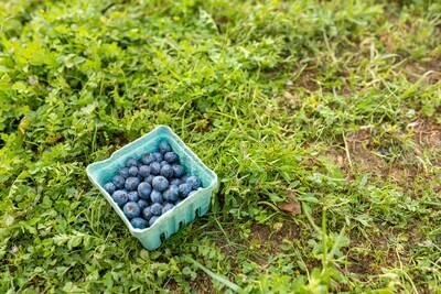 Blueberries 11oz