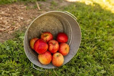 Apples- Fuji