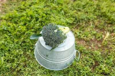 Broccoli- Head