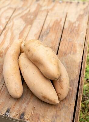 Sweet Potatoes Hannah  Sweet (white)