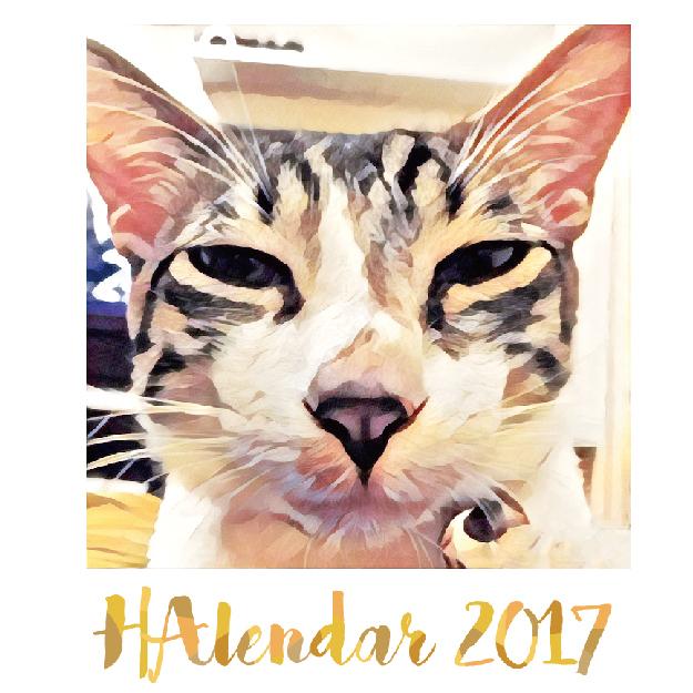 2017 HAlendar 蝦米月曆 (澳門 - 平郵需時 1 個月)