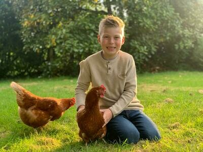 Archie's Eggs x 12