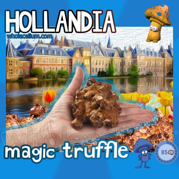 Psilocybe HOLLANDIA