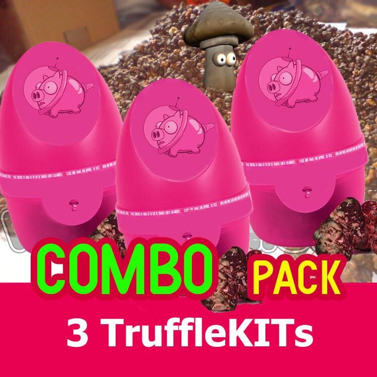 PANDORINA kutija - COMBO-Pack (3 kutije)