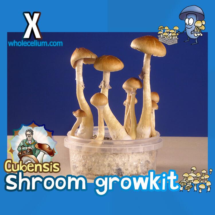 Shrooma 'X' Kit