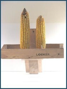 Two Ear Wooden Squirrel Feeder by Looker