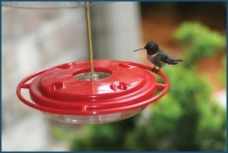 8oz. Hummerfest Hummingbird Feeder