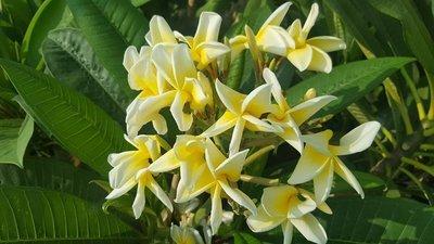 Yellow petal twist
