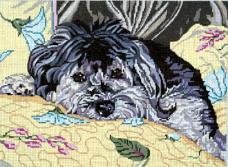 Wellington the Havanese   (Barbara Russell) *BR428