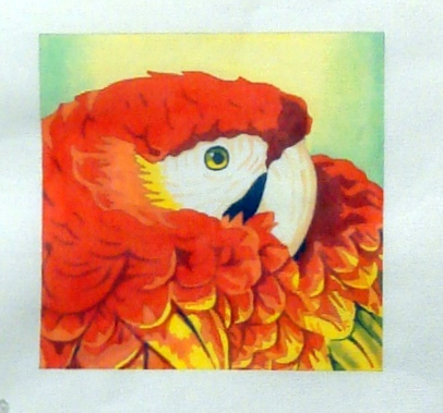Macaw Close Up A03-GJ4106B