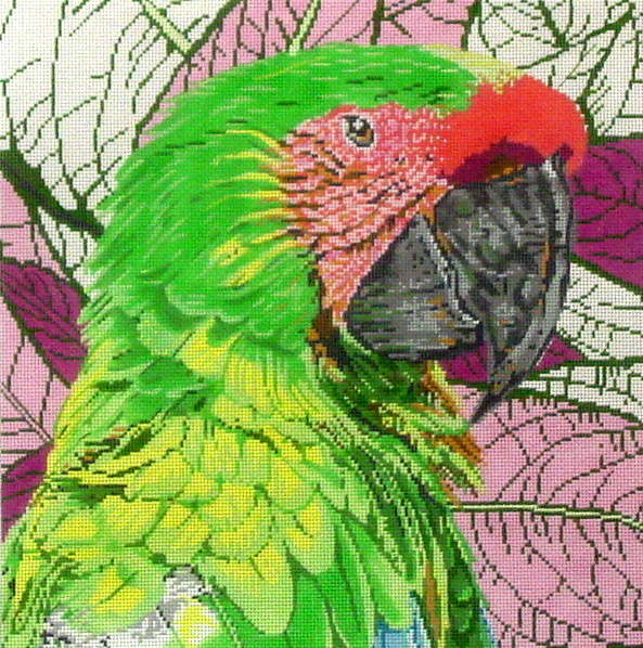 Green Macaw C-451a