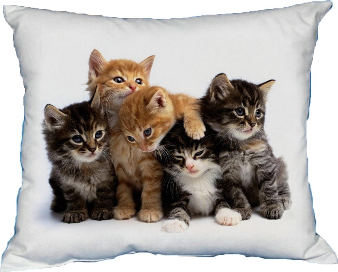 Polštářek Kočky