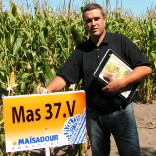 MAS 37 V