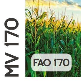 Mv 170 FAO 170