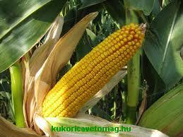 GKT 3213 FAO 240