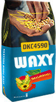 DKC 4590 WAXY FAO 350-370