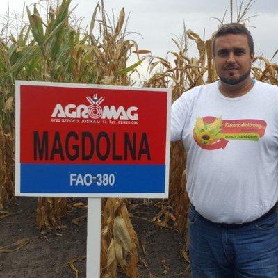 Magdolna FAO 380 (50.000 szem/zsák)
