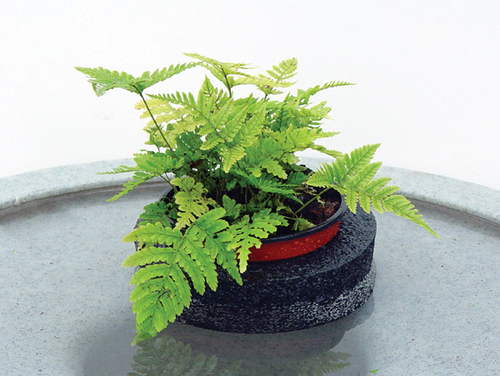 "5"" Floating Island with plants"