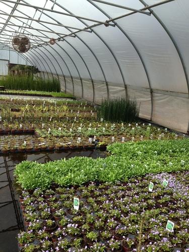 Plant assortment for Economy Wetland
