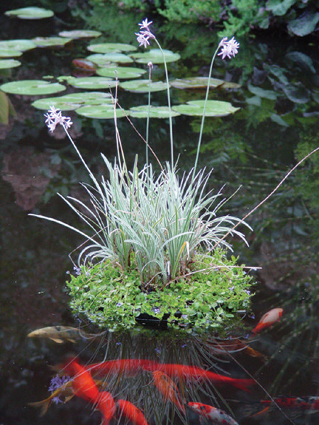 "12"" Floating Island with plants"