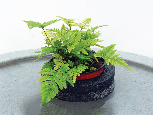 """5"""" Floating Island with plants"""